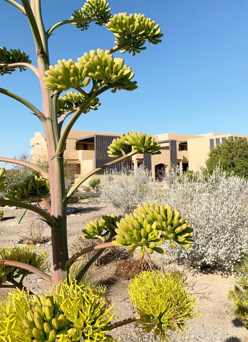 Fein angelegte Gartenanlage mit Pflanzen, die auf 2000 Meter Höhe gedeihen und Leuchten aus durchbrochenem Metall, die abends das Resort in einen Traum von 1001 Nacht verwandeln
