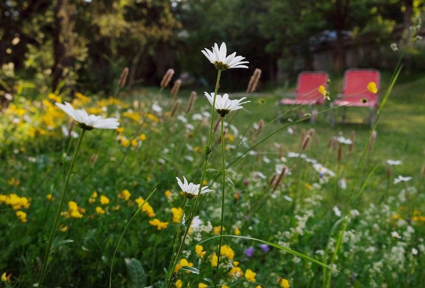 Wildblumen im großen Garten, Gartenliegen von damals, nur neu bespannt, laden zum Ausruhen ein
