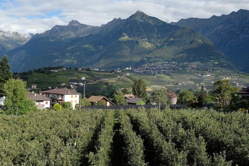 Blick aus dem Apartment – Apfelplantagen der Familie Trenkwalder, im Hintergrund das Dorf Tirol am Fuße der pyramidenförmigen Mutspitz bzw. der Texelgruppe