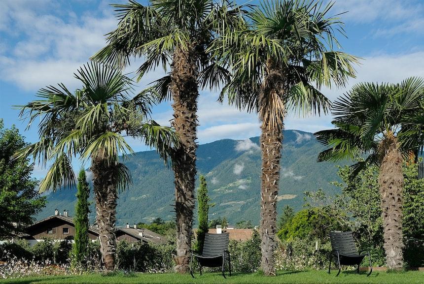 Umgeben von Apfelplantagen liegt das Aparthotel Hallinger gleich neben dem alten Familiengut Waidmannhof, Entspannung unter Palmen mit 360° Grad Bergblick