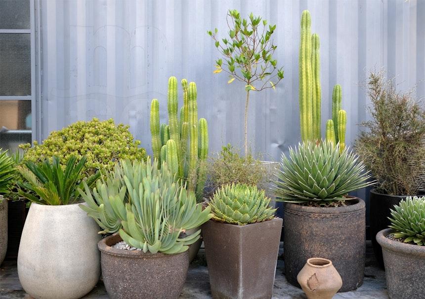 Pflanzenmix in Steingefäßen
