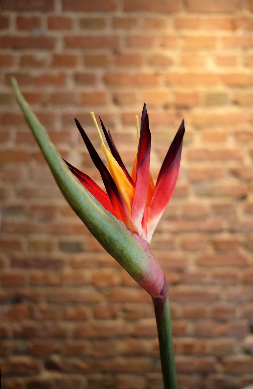 Tresendekoration – Papageienblume & Backsteinwand