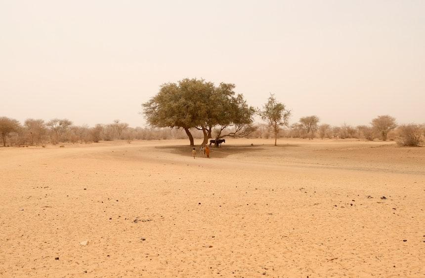 Naga Project Sudan 15
