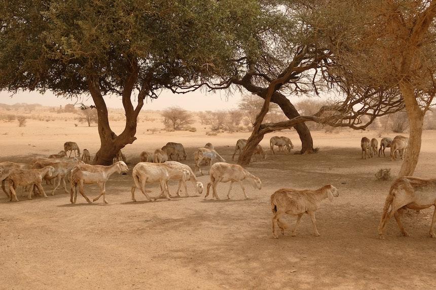 Naga Project Sudan 22