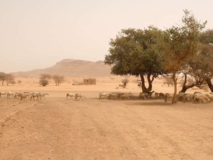 Naga Project Sudan 23