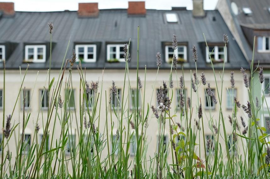 Stadtblick durch Lavendel