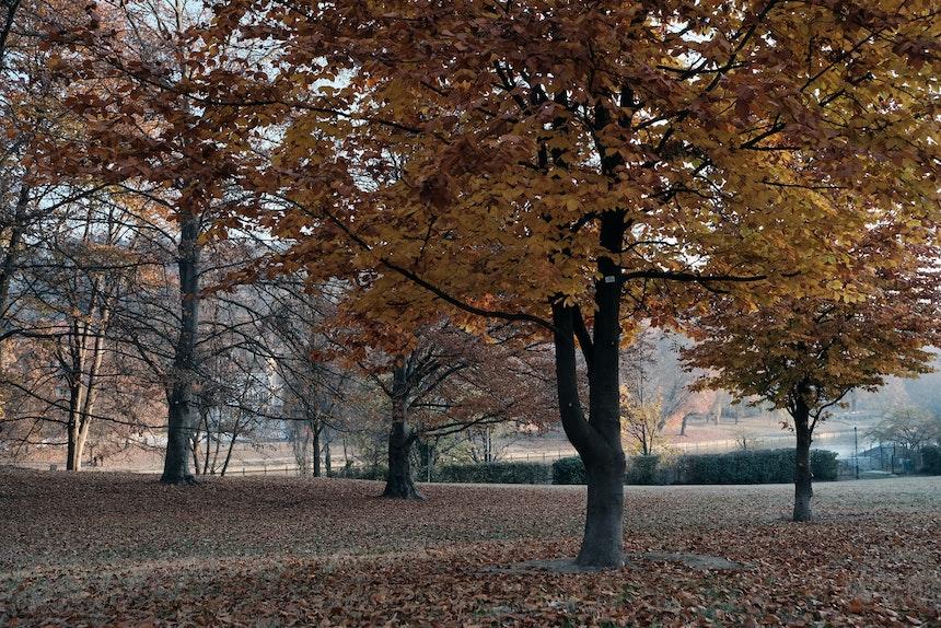 Parco del Valentino, San Salvario