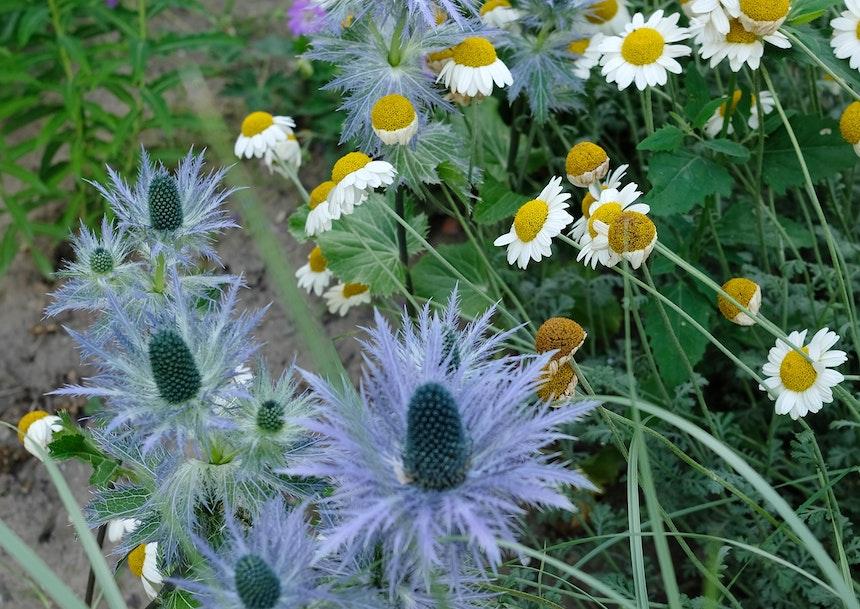 Die Blüten des neu angelegten Staudengartens vor dem Haus laden nicht nur Bienen zum Verweilen ein