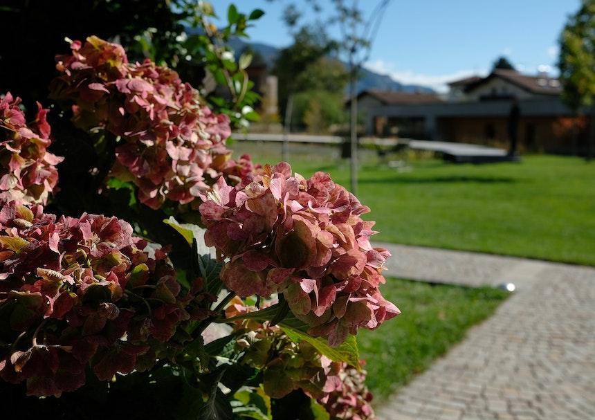 Hortensienpracht