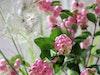Der Knaller In Der Vase Purpurbeeren 1