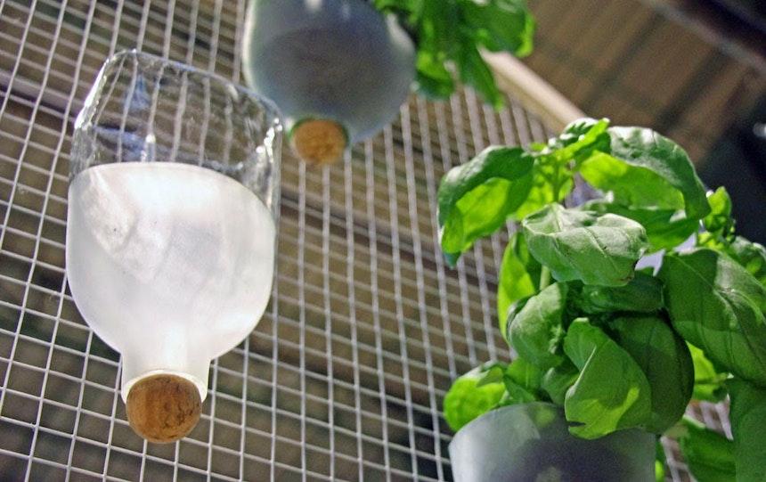 Urban Gardening (Recycling)- Projekt, Marika