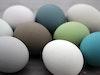 Frohe Ostern Mit Den Neuen Farben Von F B 1