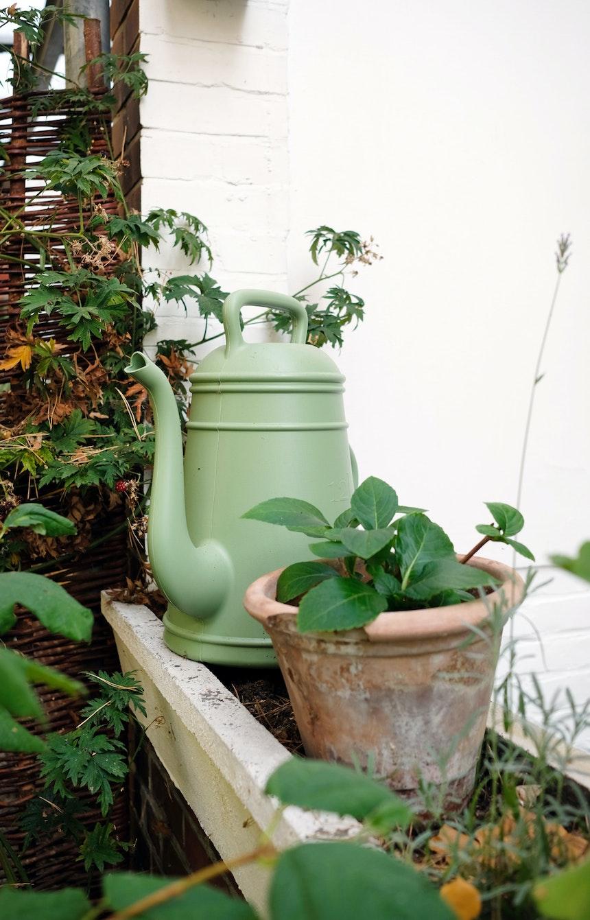 Zwischen den Pflanzen steht die dekorative Gießkanne Lungo (Xala) , ein Klassiker aus Belgien