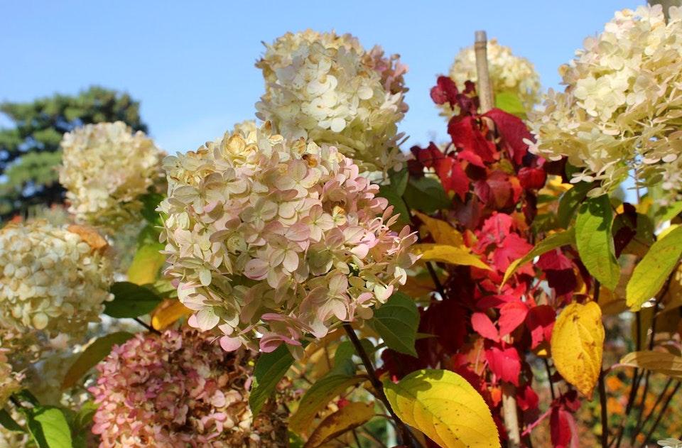 Herbstleuchten In Der Königlichen Gartenakademie 1