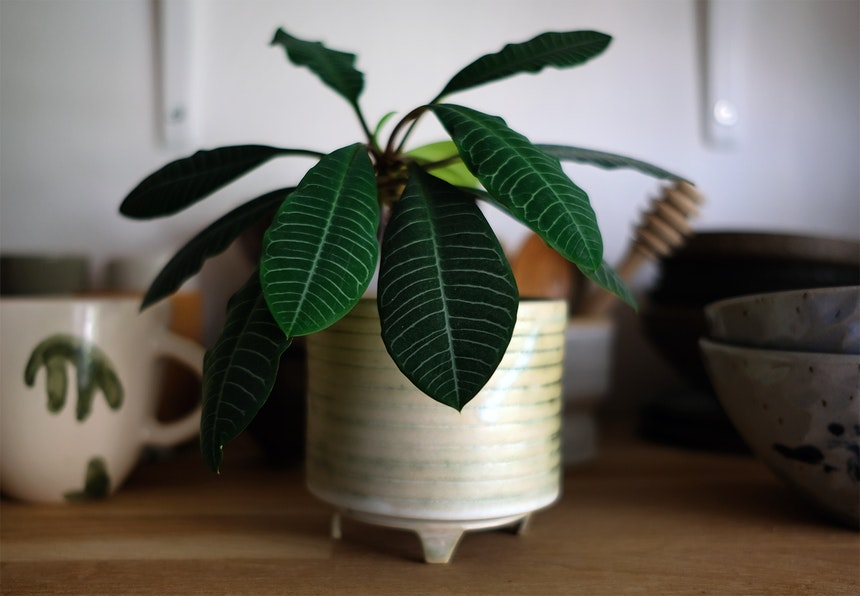 Im Küchenregal – Gestreifte Blätter und viele schöne getöpferte Gefäße