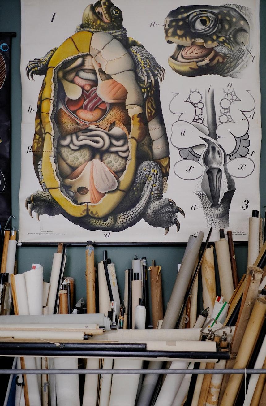 Pfurtscheller Wandtafeln, Chelonia Emys