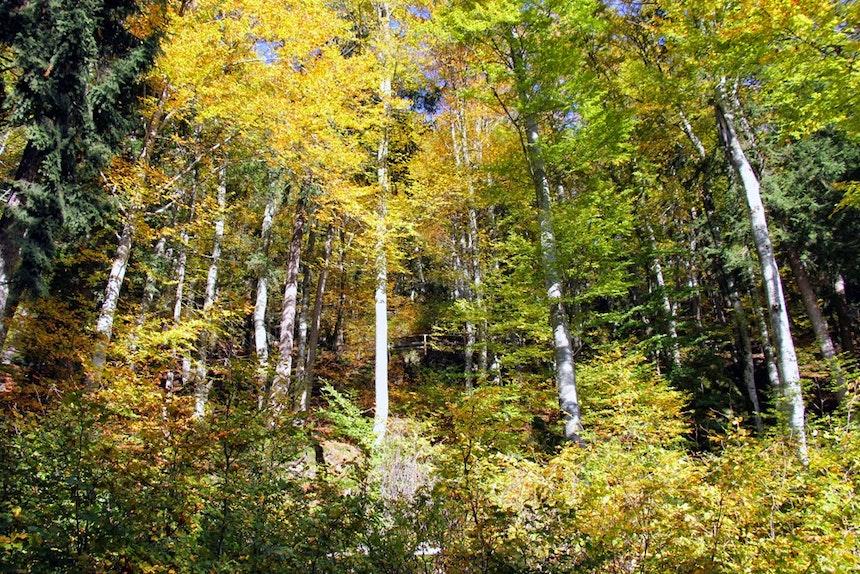 Der 30ha große »Miramonti-Wald«