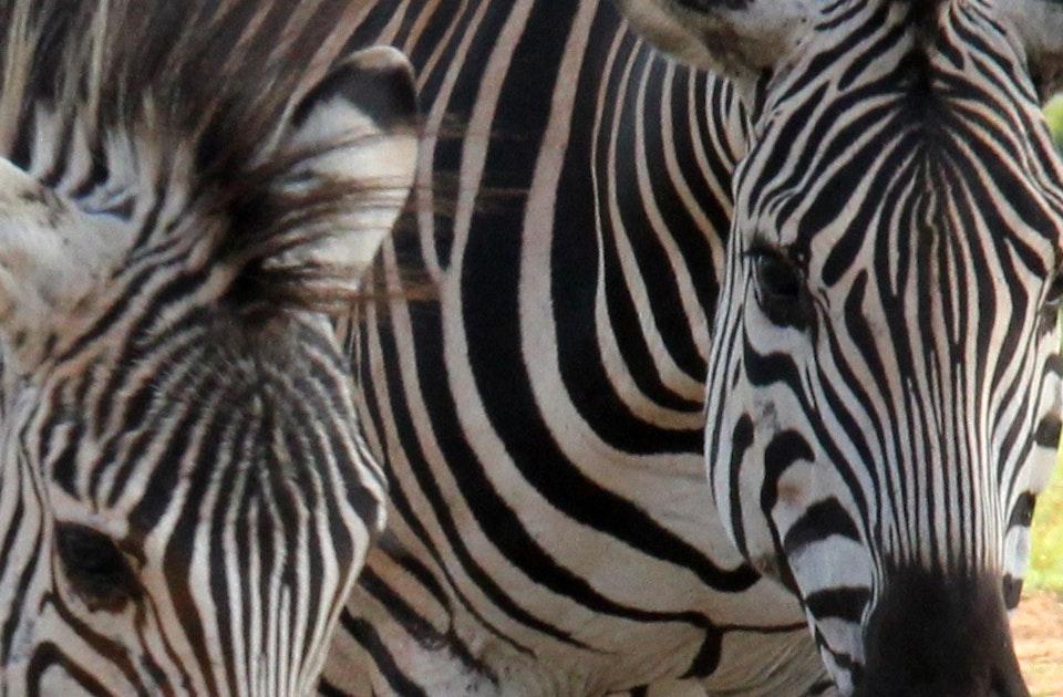 Muster Farben Formen Simbabwes Naturdesign 1