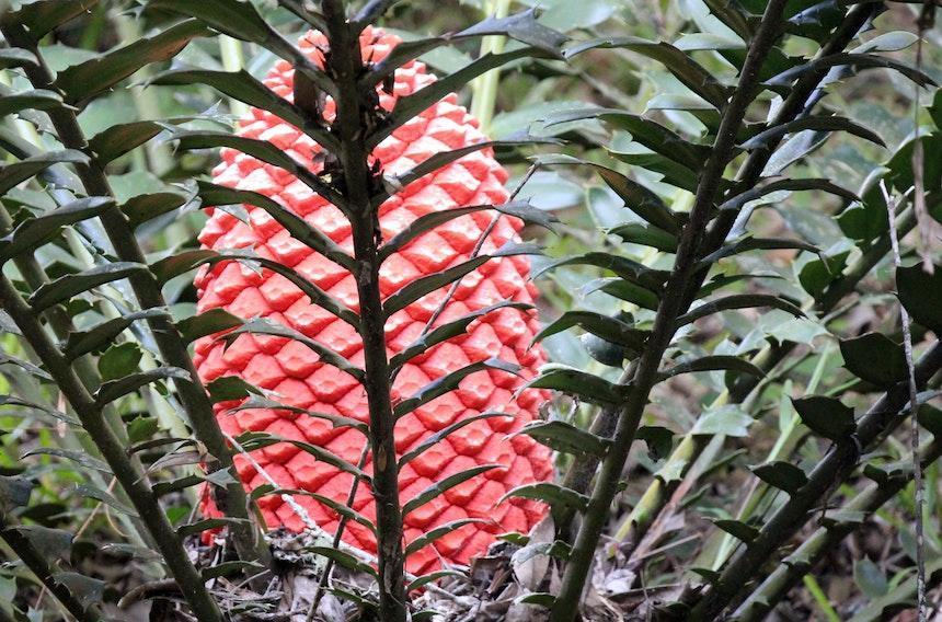 Muster Farben Formen Simbabwes Naturdesign 6