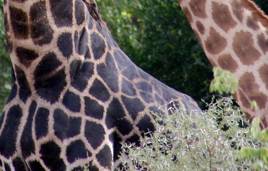 Muster Farben Formen Simbabwes Naturdesign 9