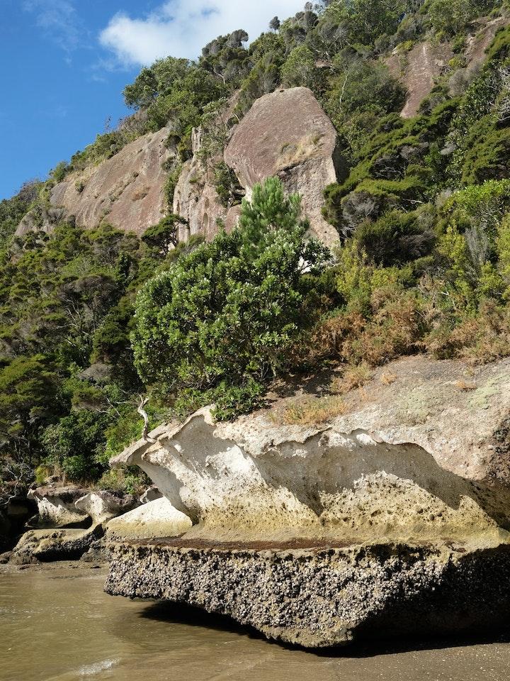 Neuseeland Nordinsel Coromandel Maramaratotara Bay