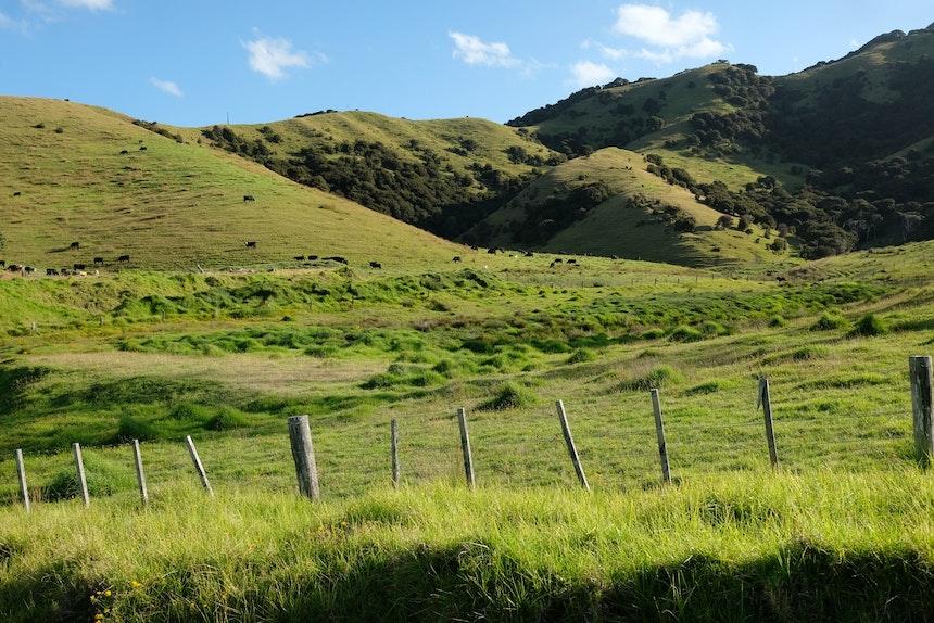 Wunderschöne Old Russel Road, Whakapara -> Russel