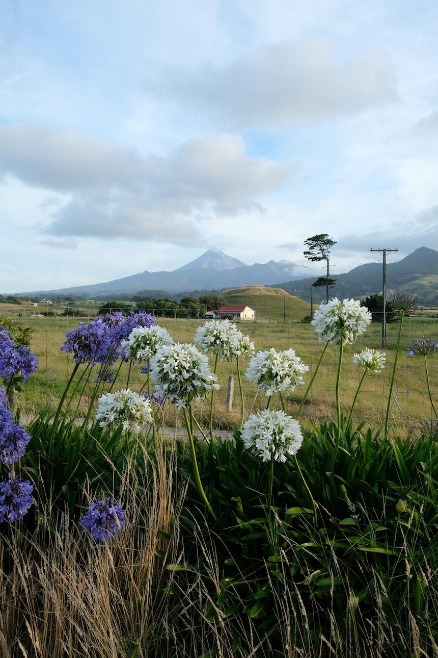 Mount Taranaki, leider ohne die für den Berg berühmte weiße Schneehaube