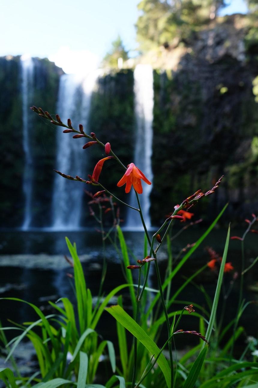 Whangarei Falls, Tikipunga