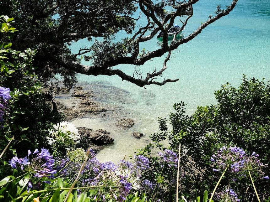 Nordinsel Neuseeland Oke Bay Rawhiti