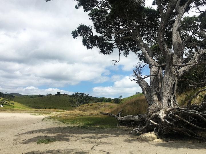 Nordinsel Neuseeland Elliot Bay 2