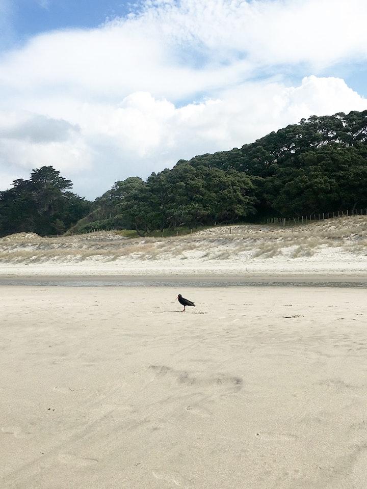Nordinsel Neuseeland Pakiri Beach 5