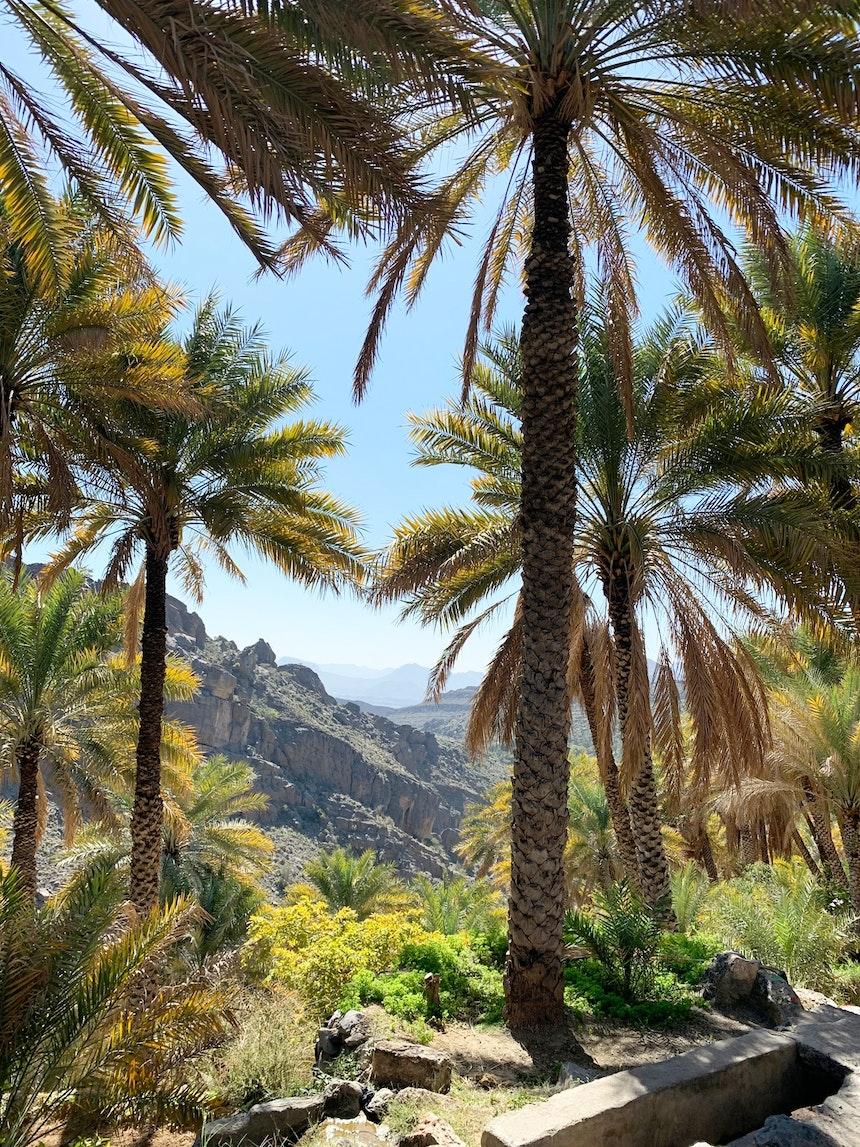 Spaziergang durch die Palmengärten von Misfat Al Abriyeen