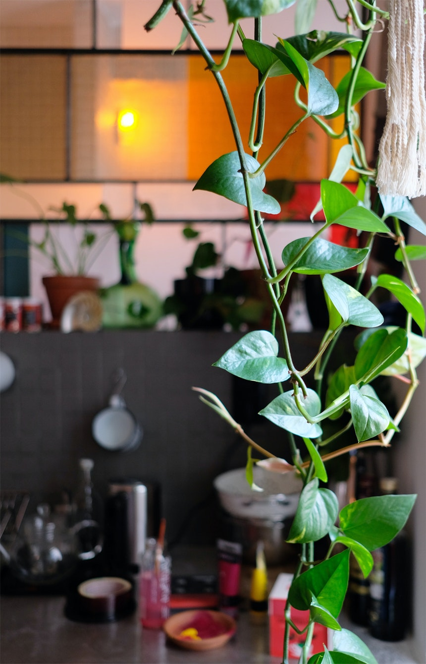 Kitchen Jungle