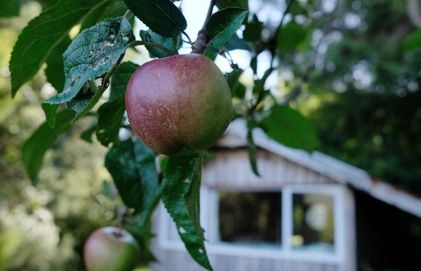 Apfelbaum und Hüttenzauber