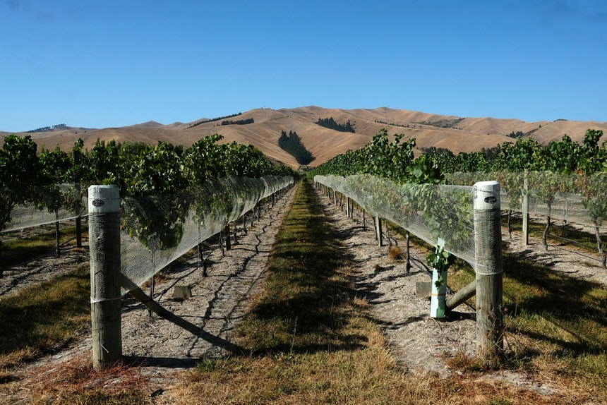Kurz vor dem Fährhafen Picton – Blenheim, eines der zahlreichen Weinanbaugebiete Neuseelands