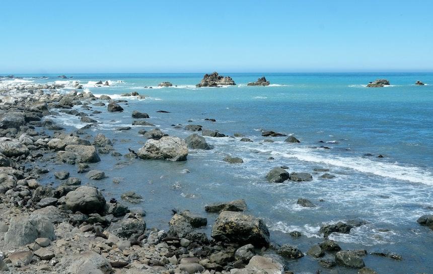 Kurzer Stop am Highway Richtung Norden – Ohau Point Look Out: Seehunde, so weit das Auge reicht