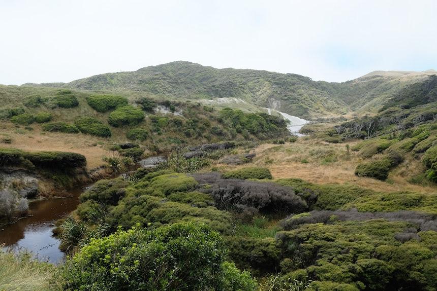 Am nördlichsten Zipfel der Südinsel gelangt man über einen kurzen Track zum Wharariki Beach