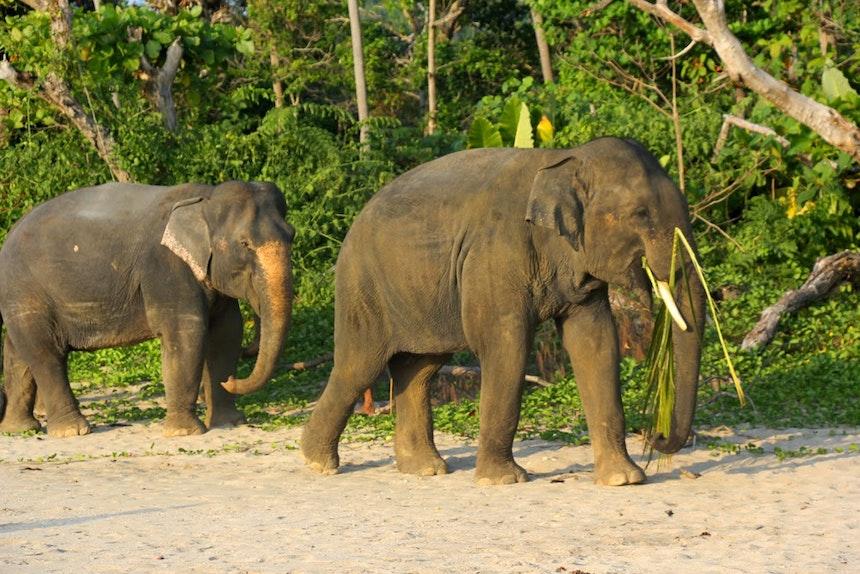 Travel Edition 4 Bamboo Bay Koh Lanta 13