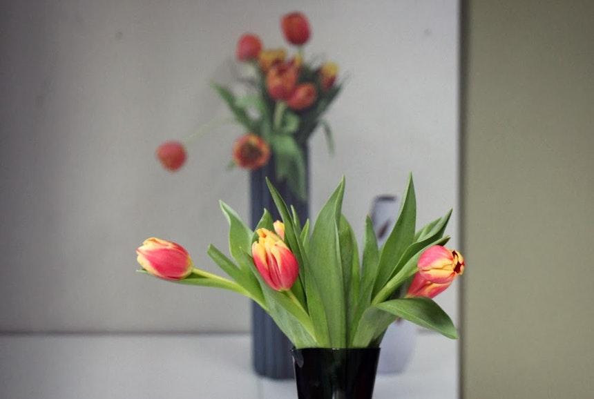 Tulips Reverse 2