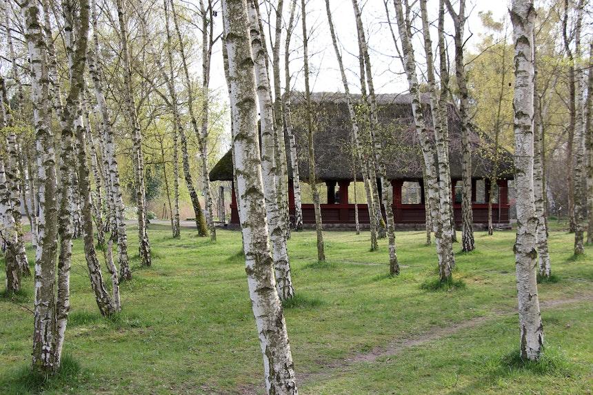 Das Birkenwäldchen mit offener Reetdachhütte am nördlichen Ende des Dreipfuhlparks