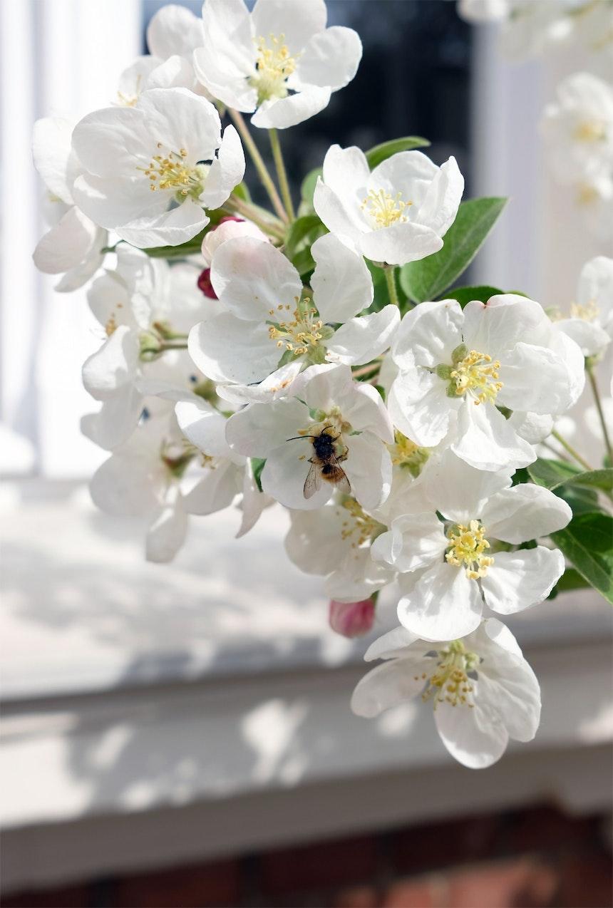 Süßer Nektar für Bienen und Hummeln